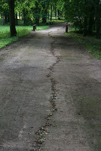 "Židrija Janušaitė. ""The Way"", leaves, about 1 km Žagarė, 2011."